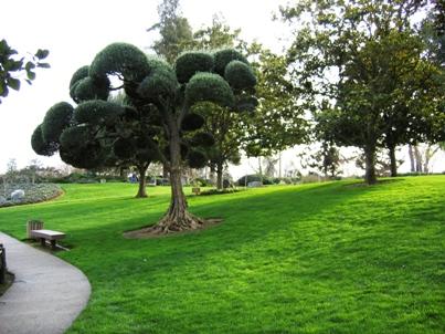 Landskape Design