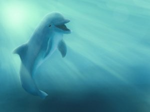 The Swimming Dolphin