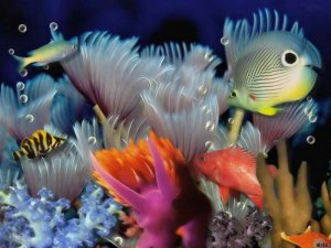 Underwater World Pictures