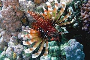 Underwater World Pictures