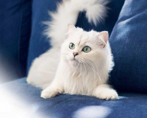 Cat Wallpapers