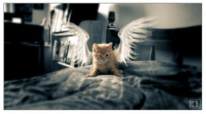 Angel Pictures