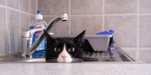 Cat Pictures
