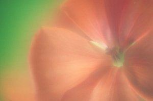 Flower Photos (Part 2)