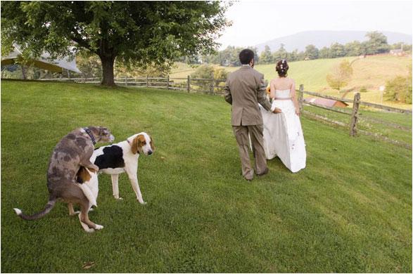 Wedding Photos and Wedding