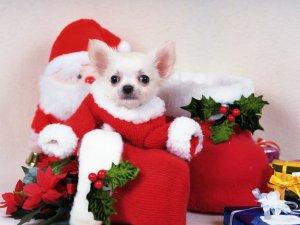 Santa's Photos