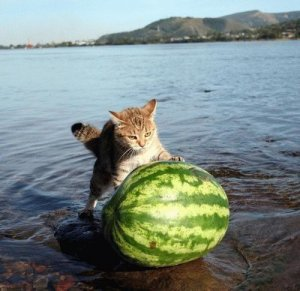 Watermelon Photos