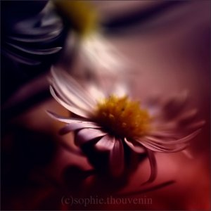 Sophie Thouvenin - Portraits and Macro