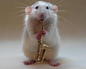 Musical Mice Photos