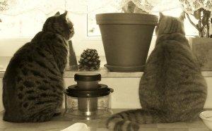 Happy Birthday Mira! (Fat Cats)