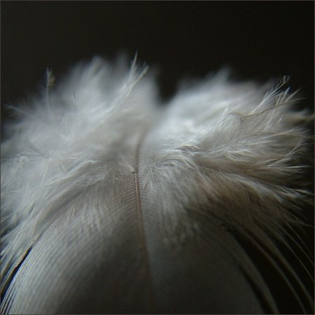Kiki Plumier on Feathers