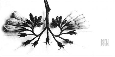 Mi3ch Phylosophy
